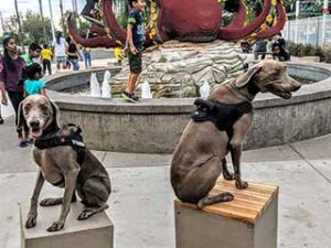 Distraction Proof Dogs